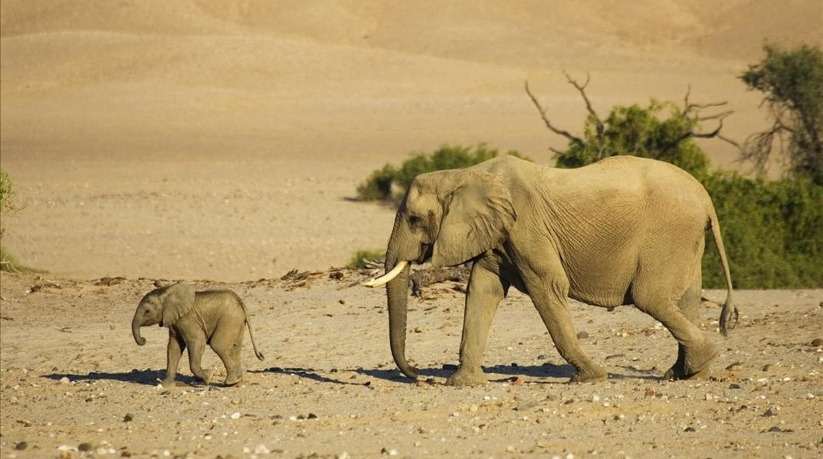 Unos elefantes en una imagen de archivo.
