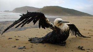Un pájaro envuelto en petróleo intenta mover sus alas en la playa del Mar de Fora (Fisterra) tras el vertido del Prestige del noviembre del 2002