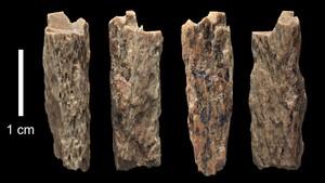 Fragmento óseo encontrado en la cueva de Denísova (Siberia) en el 2012.