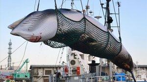 Captura de una ballena con fines científicos en Japón.