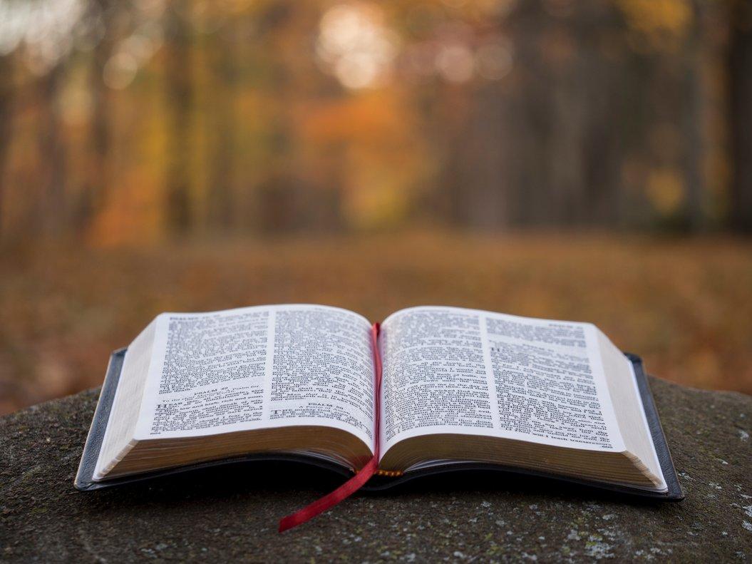 12 libros recomendados para regalar en 2019
