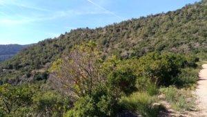 La batida se realizó el sábado en una zona del Parc del Garraf próxima al Castell Eramprunyà de Gavà