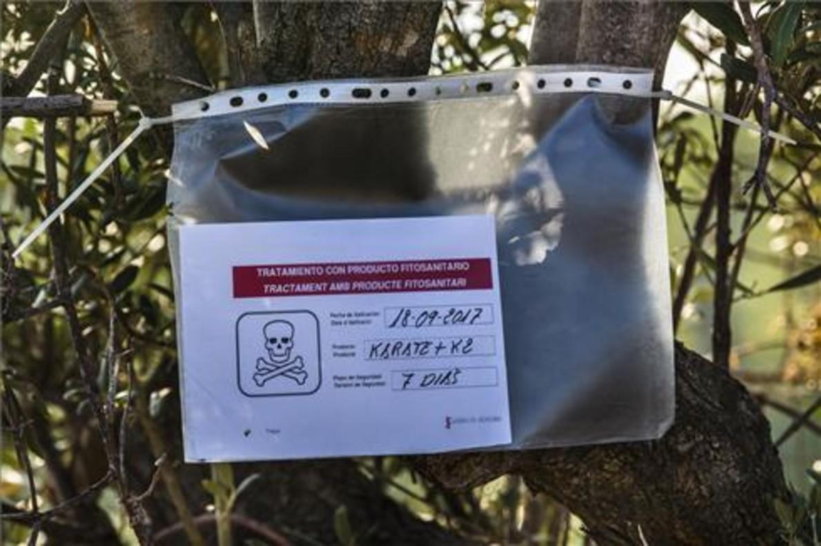 Cartel de la Generalitat valenciana en un olivo fumigado en relación con la plaga la Xylella fastidiosa, en la comarca alicantina de la Marina.