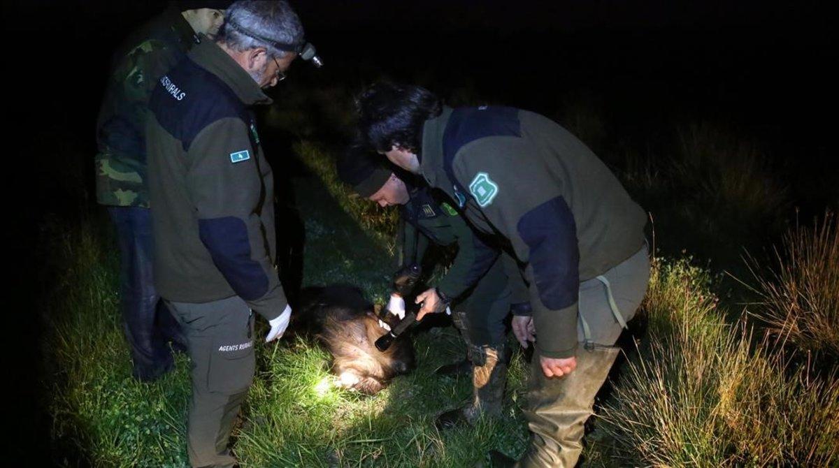 Dos agentes rurales de la Generalitat en Conllserola.