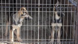 Dos perros en una jaula