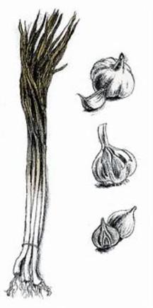 La elegancia de las verduras