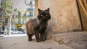 Un gato callejero.