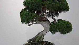 Le roban siete bonsáis valorados en miles de euros y pide públicamente al ladrón que los cuide