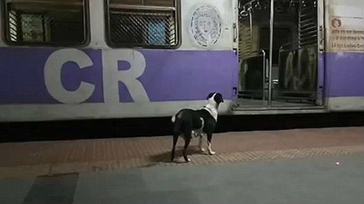 Cada noche esta perra acude a la estación de Kanjurmarg, en Bombay, y nadie sabe a quién o qué busca.