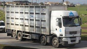 Un camión de transporte de cerdos en una imagen de archivo.