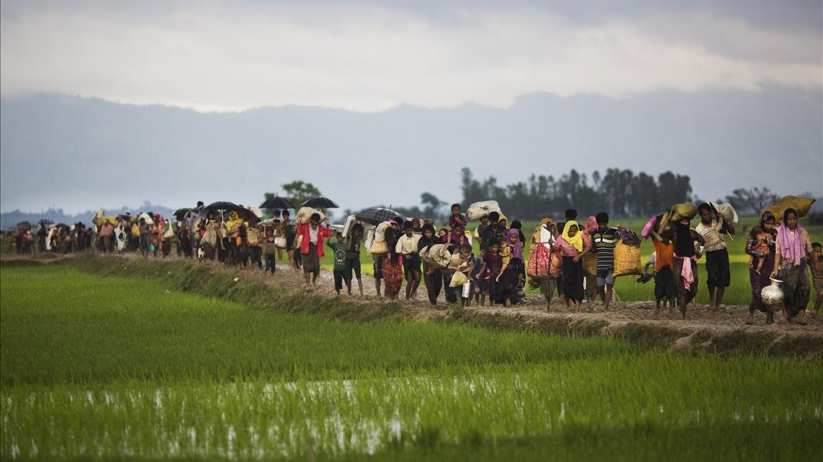 Miembros de la minoría rohinya caminan por un campo de arroz en su huida de Birmania para refugiarse en Bangladés.