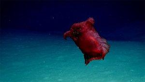 El monstruo del pollo sin cabeza ha sido visto por primera vez en aguas australes.