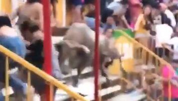 El toro entre las gradas de la plaza de Vidreres.