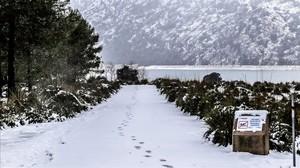 La neu obliga a tallar tres carreteres a Mallorca