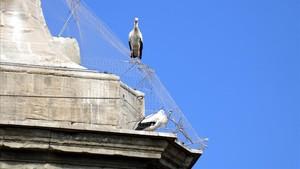 Aves atrapadas en la catedral Nova de Lleida.
