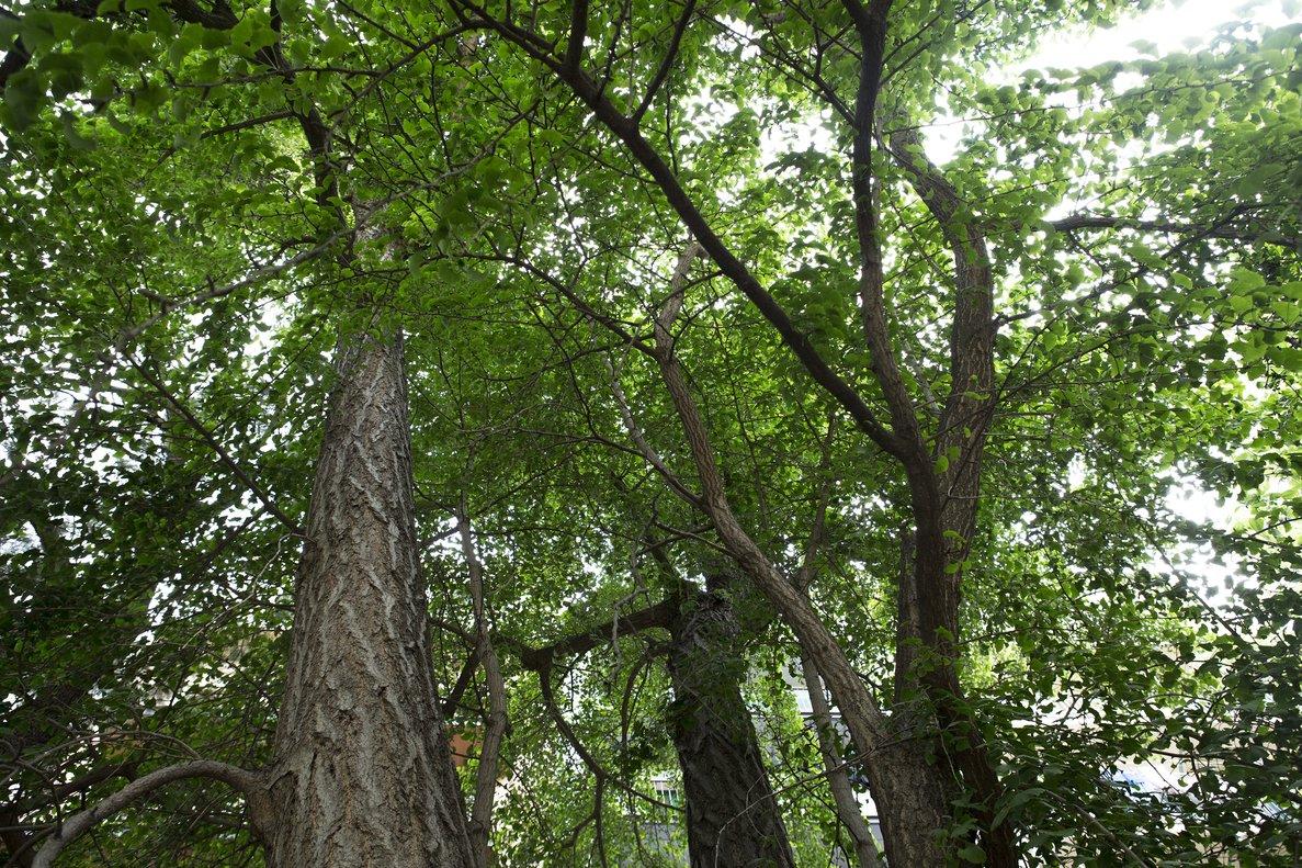 Hondures anuncia la sembra de més de dos milions d'arbres