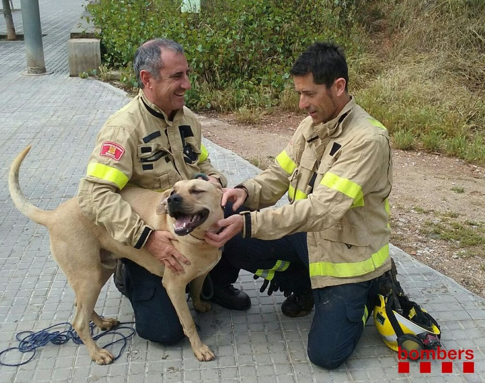 Els bombers es mobilitzen per rescatar un gos a Barcelona