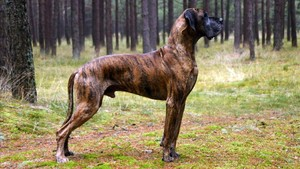 Un perro en una imagen de archivo
