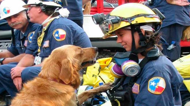 Despedida a Bretagne, el último de los perros que participó en las tareas de rescate del 11-S que quedaba vivo.