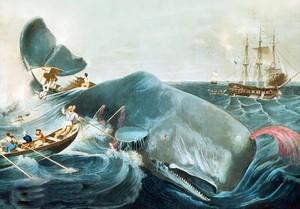 Moby Dick: cómo domar a un monstruo (de mil páginas)