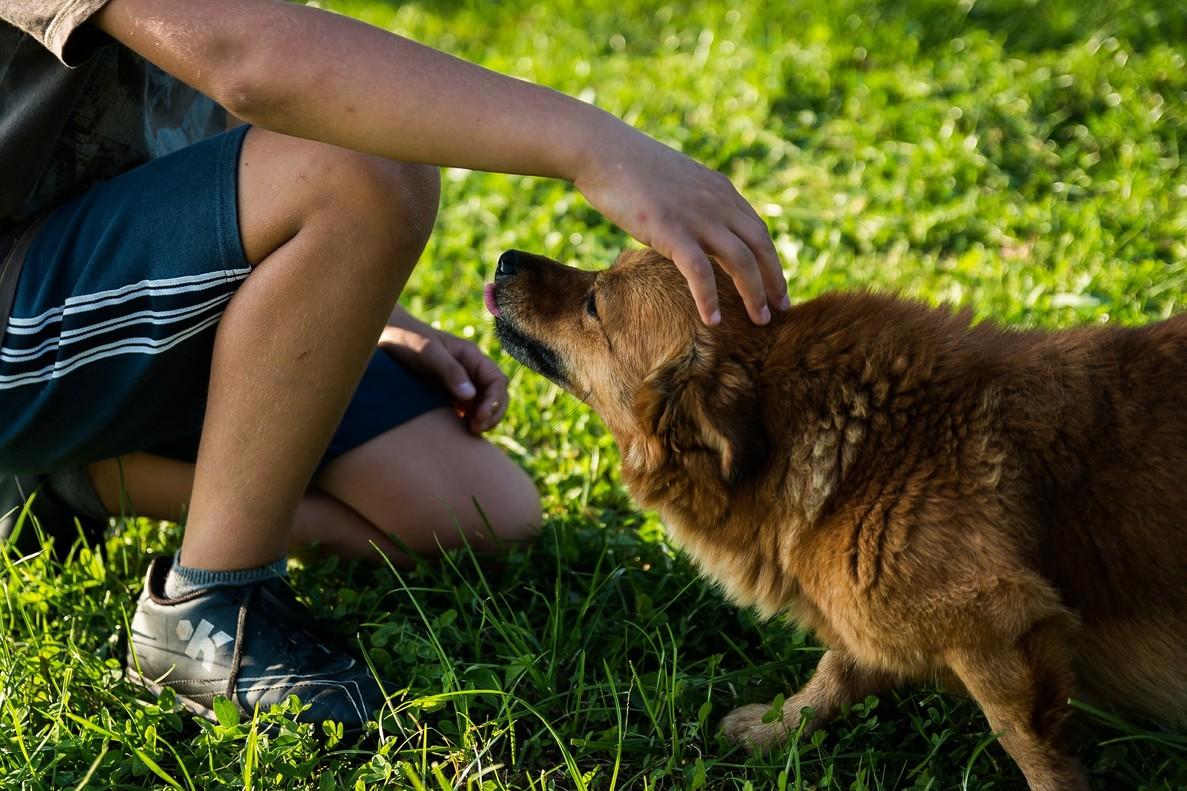 Guía para entender a tu perro: esto es lo que significan sus gestos