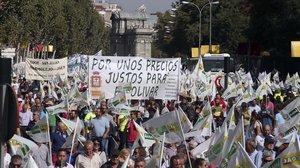 Olivareros durante la manifestación en Madrid en defensa de un precio justo para el aceite.