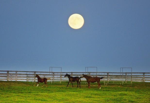 La superluna, sobre un prado en las afueras de Toronto (Canadá), esta madrugada.