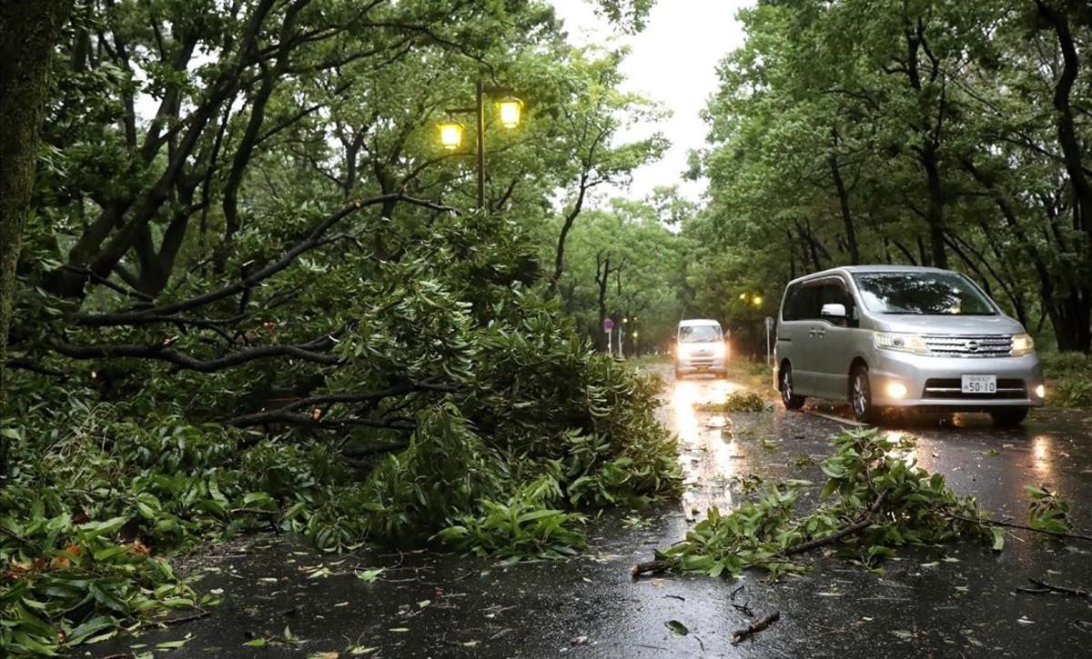 Unos coches conducen entre árboles caídos en Nagoya.