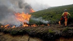 Un bombero realiza un cortafuegos en las inmediaciones de la reserva de la biosfera de Muniellos (Asturias),considerado como el robledal mejor conservado de Espana, el pasado lunes.