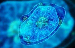 Representación de una ameba, un organismo unicelular
