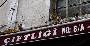 Missió: salvar els animals de carrer