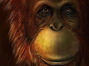 Reconstrucción artística de un Gigantopithecus
