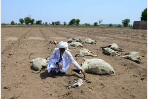 Las altas temperaturas en la India provocan la muerte de animales y personas.