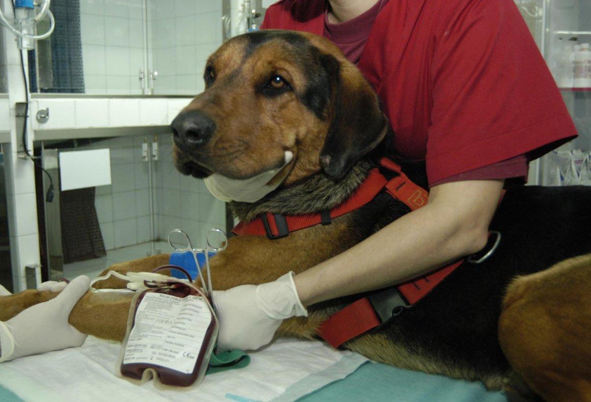 """""""Llevé a mi perro al veterinario y lo atendió un Golden Retriever"""""""