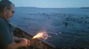 Un pescador lanza explosivos a un grupo de leones marinos que salen despavoridos
