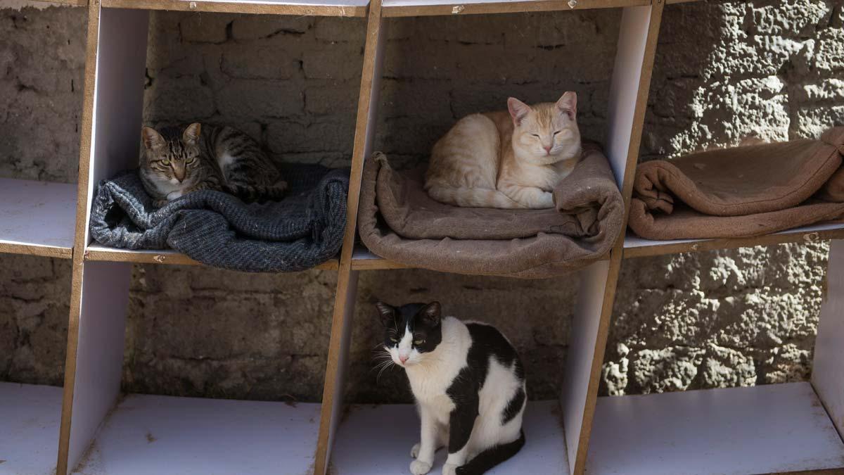 Un refugio para animales en Egipto aloja y rescata a perros y gatos maltratados.