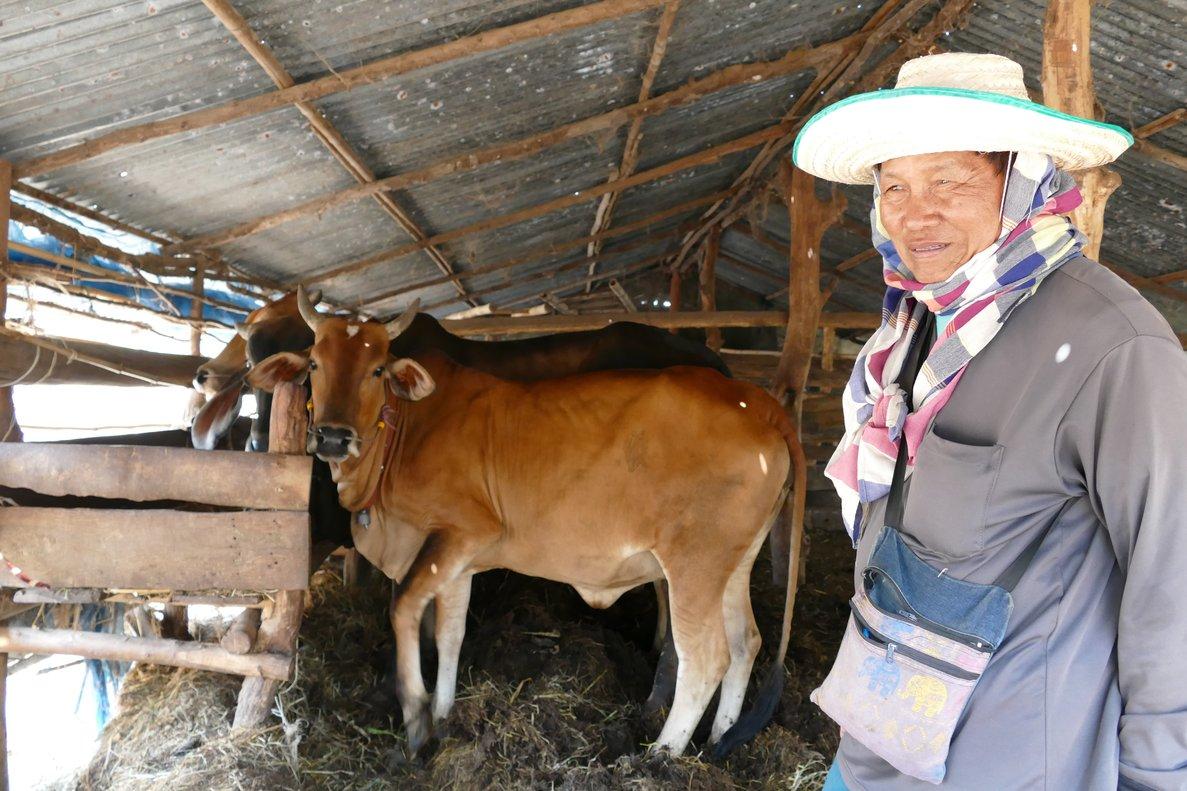 San Sornnum alimenta a sus vacas en Khon Kaen (Tailandia).
