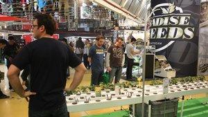 Catalunya s'erigeix en horta europea del gran negoci de la marihuana