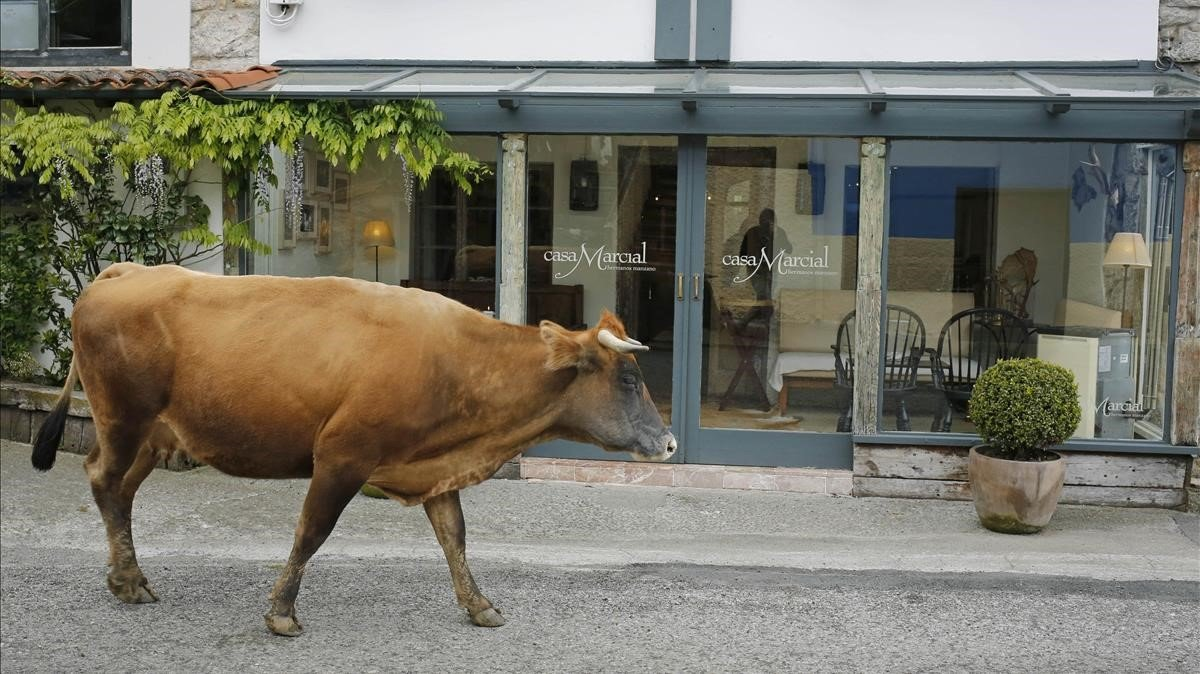 Una vaca pasa ante la entrada principal del restaurante Casa Marcial, en la aldea de La Salgar, Arriondas, Asturias.