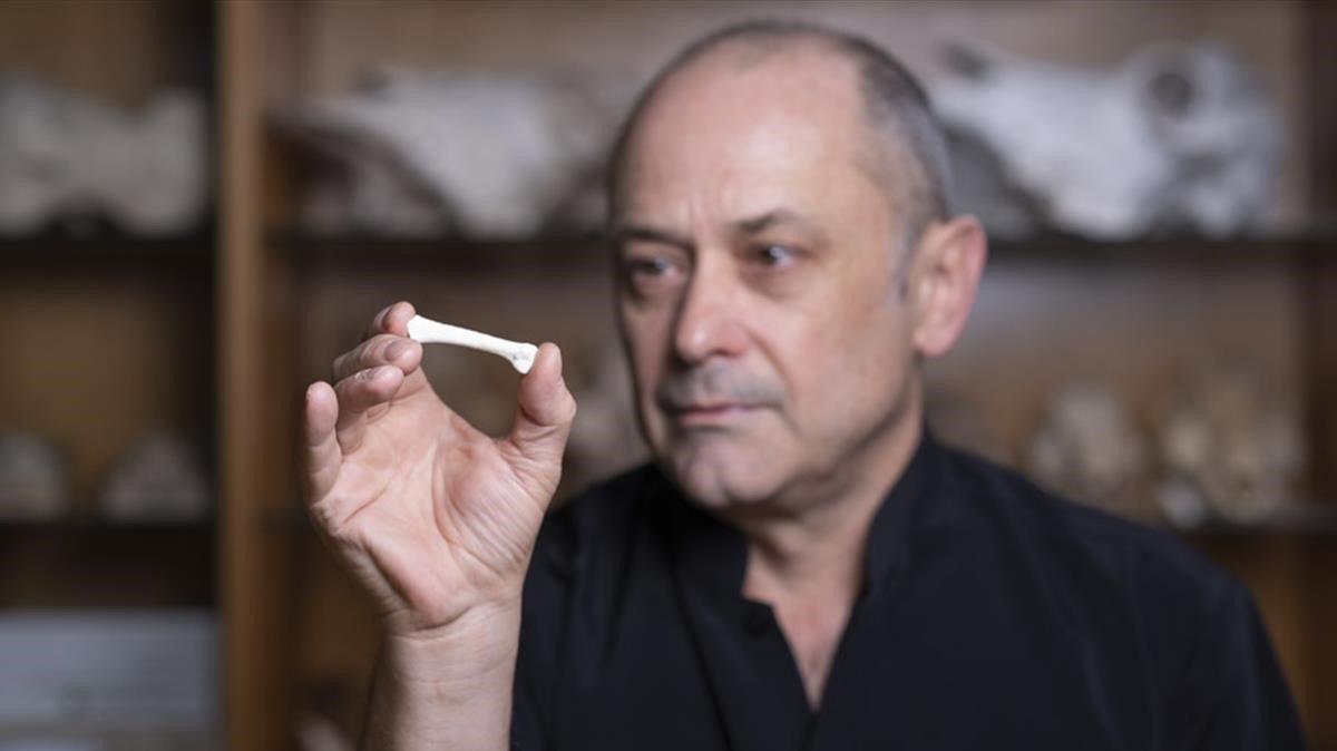 Un investigador sujeta uno de loshuesosde Homo luzonensis, la recién descubierta especie de homínido que vivió en Filipinas hace unos50.000 años