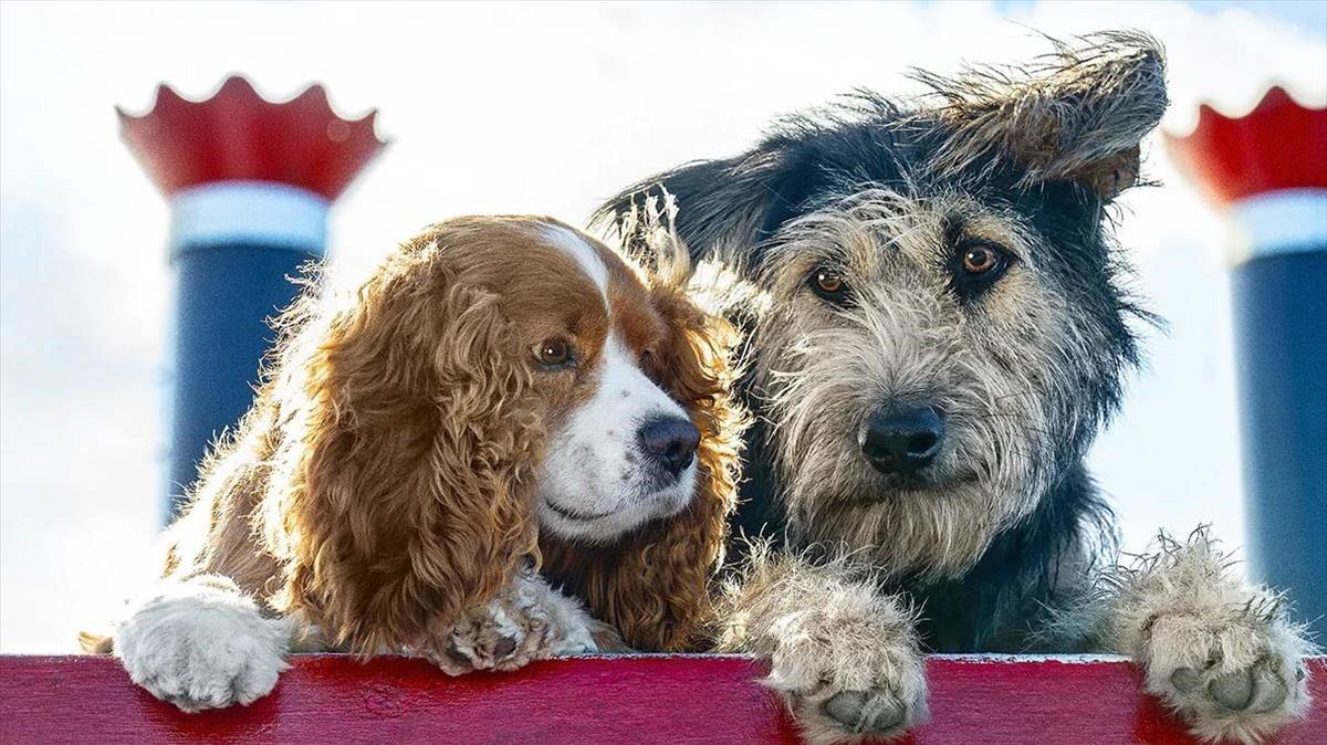 Crítica de 'La dama y el vagabundo': aquests no són els nostres gossos