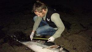 Un dofí mort i amb un nom gravat a ganivet apareix en un platja d'Almeria