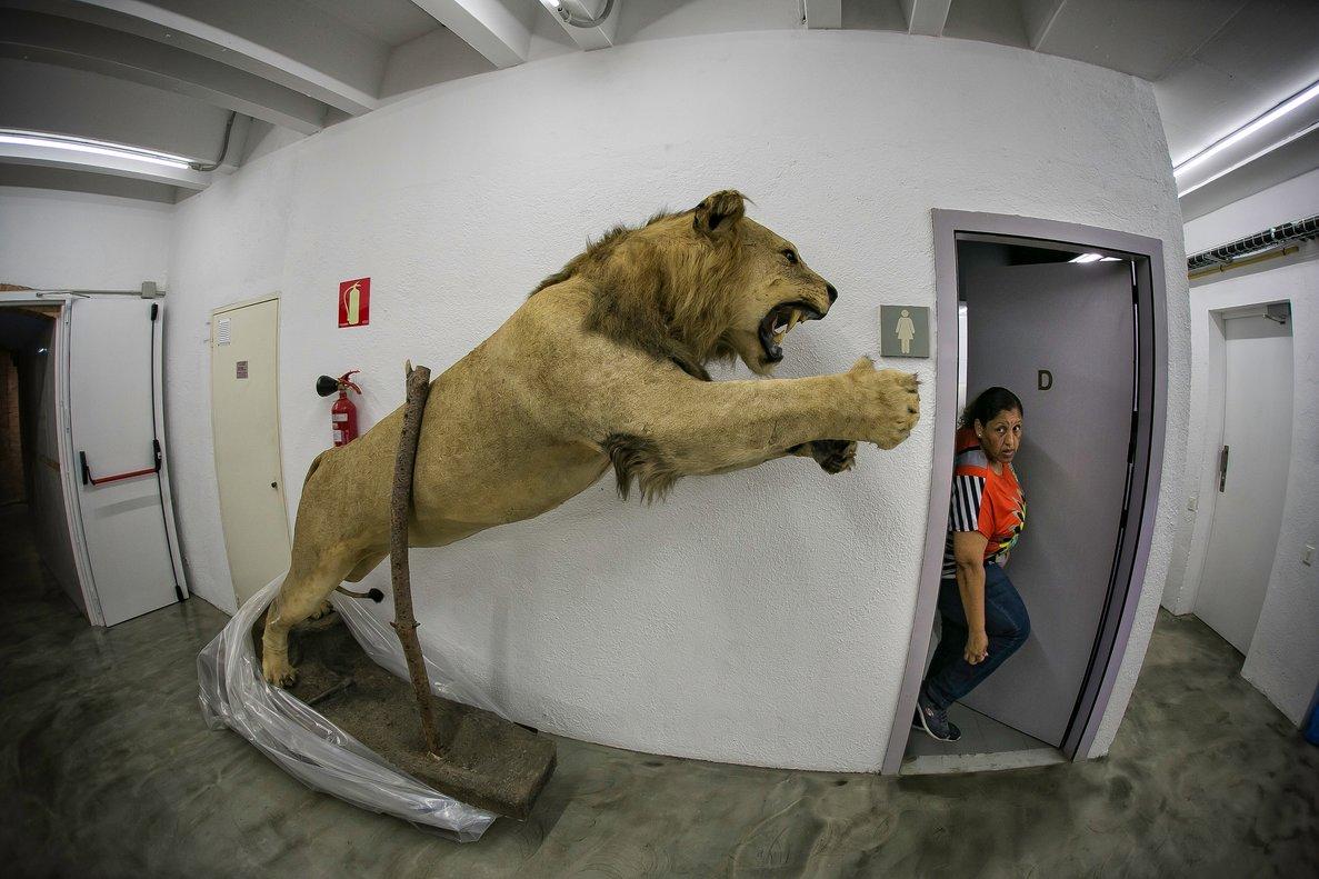 El lleó rampant de Castelldefels