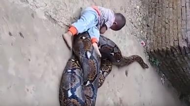 El impactante vídeo de un bebé jugando con una serpiente pitón en Indonesia