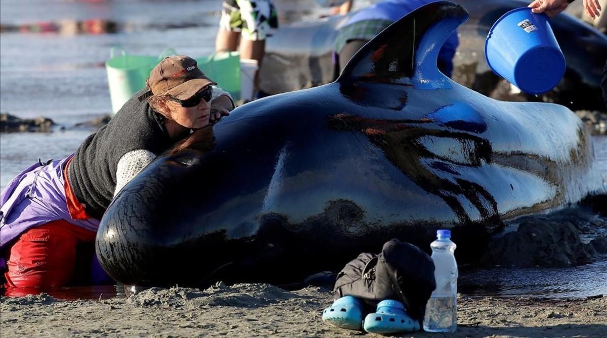 Voluntarios atienden a ballenas varadas en Nueva Zelanda.