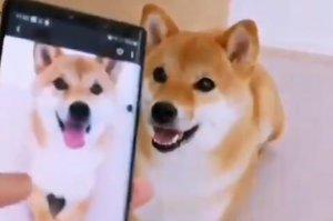 El adorable perro que imita sus propias poses en fotos y triunfa en la Red