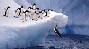 Un grupo de pingüinos, en aguas de la Antártida.