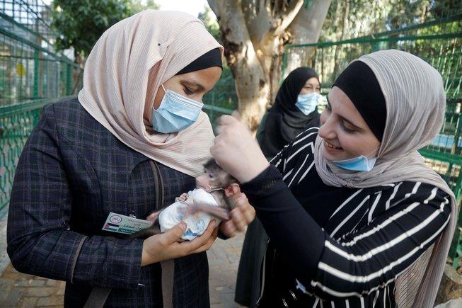 Visitantes sostienen una cría de babuino en el Qalqiliya Zoo (Palestina)donde los trabajadores aseguran que el confinamiento por el coronavirus ha coincidido con un 'boom' de nacimientos de animales.