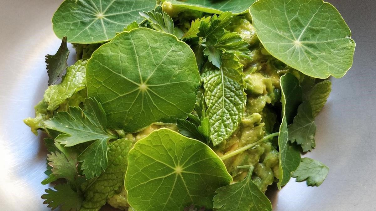 Guacamole manso cubierto de hierbas: foto hecha en casa.