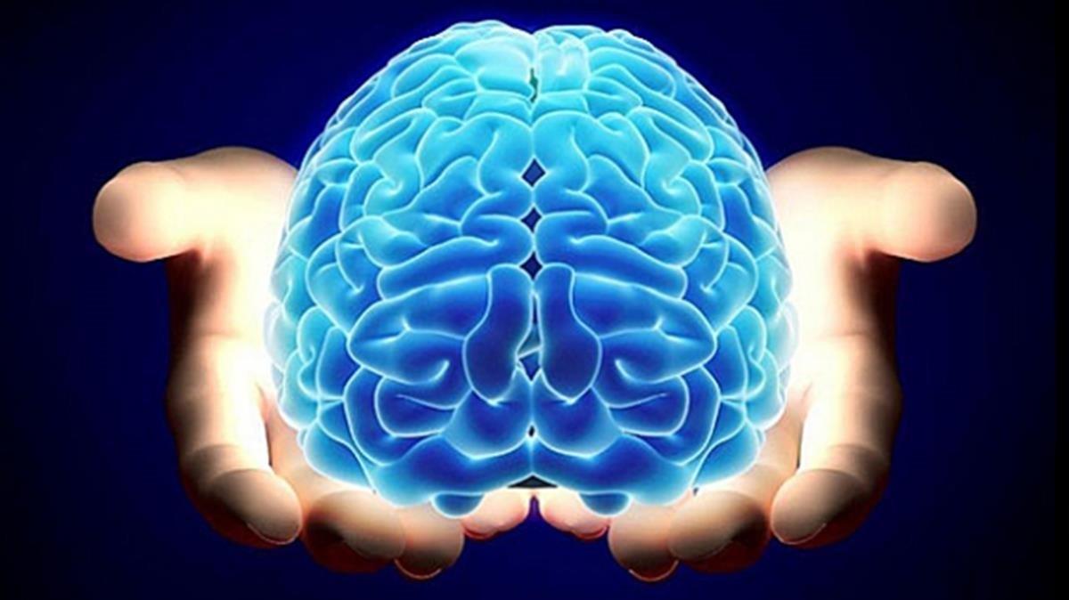 Una 'startup' se ofrece a conservar el cerebro para siempre